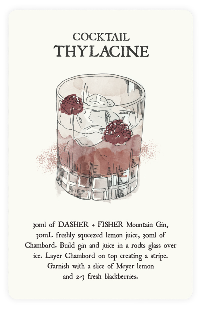 dasher-fisher-cocktail-card-made-by-the-sundae-agency-1
